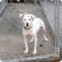 Adopt A Pet :: Rocket - Blountstown, FL