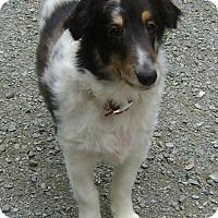 Adopt A Pet :: Callie - Richmond, VA