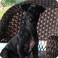 Adopt A Pet :: Mina - Nicholasville, KY