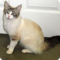 Adopt A Pet :: Bindi - Creston, BC