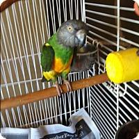 Adopt A Pet :: Turbo - Los Angeles, CA