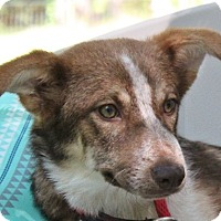 Adopt A Pet :: Doris - Locust Fork, AL