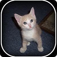 Adopt A Pet :: Mugzee - South Plainfield, NJ