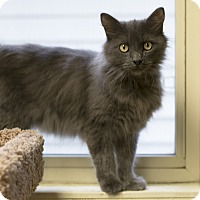 Adopt A Pet :: Husker - Fremont, NE