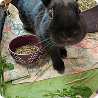 Adopt A Pet :: PEPPER - Boston, MA