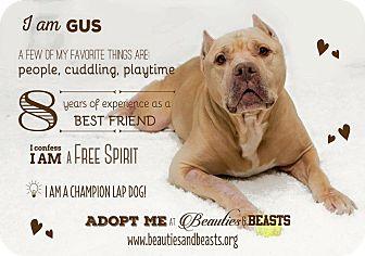 American Staffordshire Terrier Mix Dog for adoption in Wichita, Kansas - Gus