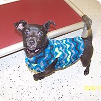 Adopt A Pet :: Haley - Burgaw, NC