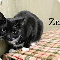 Adopt A Pet :: Zeva - Melbourne, KY