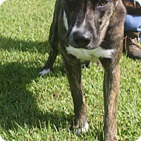 Adopt A Pet :: Roscoe - Friendswood, TX