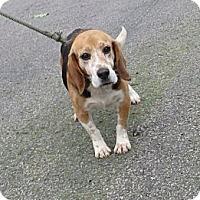 Adopt A Pet :: Bobby - Transfer, PA
