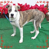 Adopt A Pet :: PAULETTE- avail 12/1 - Marietta, GA