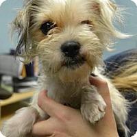Adopt A Pet :: Regina - Chester Springs, PA