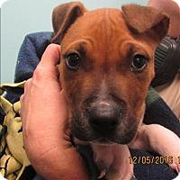 Adopt A Pet :: 16-12-3678 Franklin - Dallas, GA
