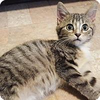 Adopt A Pet :: Glinda - Palatine, IL