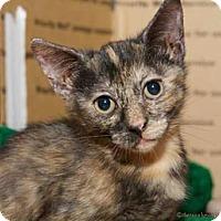 Adopt A Pet :: Gretal - Satellite Beach, FL