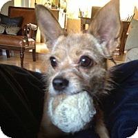 Adopt A Pet :: Monkey - San Francisco, CA