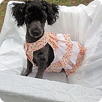 Adopt A Pet :: Lacey - Mooy, AL