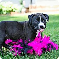 Adopt A Pet :: JuJu - Bradenton, FL