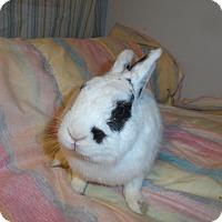 Adopt A Pet :: Picasso - Hillside, NJ