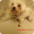 Adopt A Pet :: *MILES