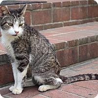 Adopt A Pet :: Charlie - Ruther Glen, VA