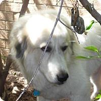 Adopt A Pet :: Roxanne - Garland, TX
