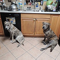 Adopt A Pet :: Frodo and Bubba - Pomerene, AZ