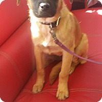 Adopt A Pet :: Sienna - Rancho Cucamonga, CA