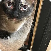 Adopt A Pet :: Omi - Northbrook, IL