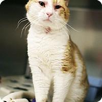 Adopt A Pet :: Marlon - Appleton, WI