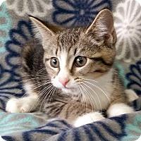 Adopt A Pet :: Evie - Addison, IL