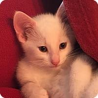 Adopt A Pet :: Ernie - Ortonville, MI