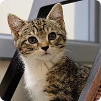 Adopt A Pet :: Timmy - Durham, NC
