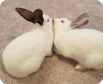 Other/Unknown Mix for adoption in Edmonton, Alberta - Salt and Pepper