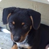 Adopt A Pet :: Macari - East Sparta, OH