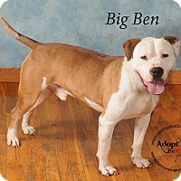 Adopt A Pet :: Big Ben - Topeka, KS