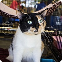 Calico Cat for adoption in Mooresville, North Carolina - A..  Daphne