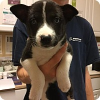 Adopt A Pet :: Betty Davis - Summerville, SC