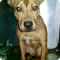 Adopt A Pet :: Jill - Barnegat, NJ
