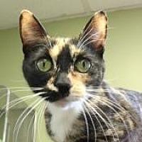 Adopt A Pet :: Linda (Westhampton) - New York, NY