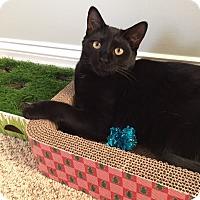 Adopt A Pet :: Cole - Parkton, NC