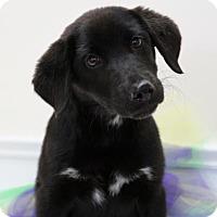 Adopt A Pet :: Tatatoo - Picayune, MS