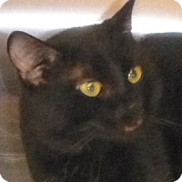 Adopt A Pet :: Mister Banks - Buhl, ID