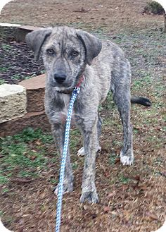 Adopt A Pet :: Faith  - Snow Hill, NC