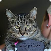 Adopt A Pet :: Pim - Edwardsville, IL