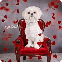 Adopt A Pet :: Shuggie 3186 - Toronto, ON