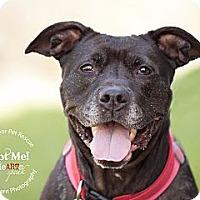 Adopt A Pet :: Glitter - Medina, OH