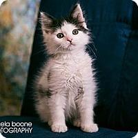 Adopt A Pet :: Crush - Eagan, MN