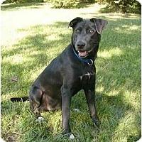 Adopt A Pet :: Opal - Mocksville, NC