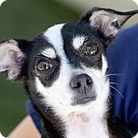 Adopt A Pet :: Twiggie - Mission Viejo, CA